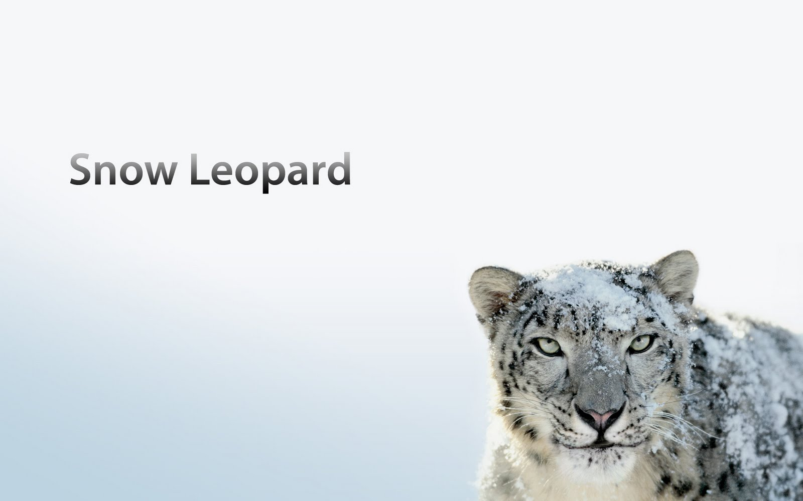 Mac OS X Apple annuncia la fine supporto Snow Leopard
